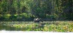 a1sx2_Thumbnail1_moose_peterson_lake.jpg